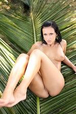 Angelica Kitten IN Coconut 06